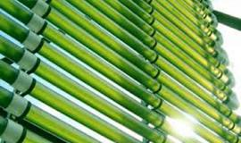 We are looking for investors for an algae breeding company
